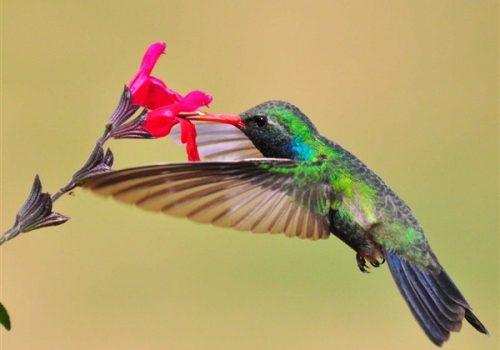 Thuật toán GoogleHumming Bird